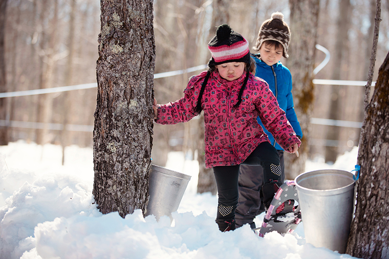 Photo showing children around maple trees for demonstration of the Local canadian industry of maple syrup in Quebec Canada. They are wearing winter coat.